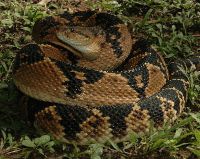 """""""Every other species on Earth knows to AVOID venom, assholes."""" Source: Wikimedia commons"""